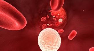 Как увеличить количество лейкоцитов