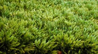 Как выбрать искусственную траву