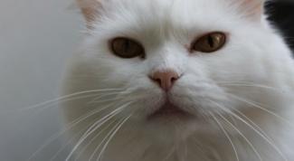 Как дать имя коту