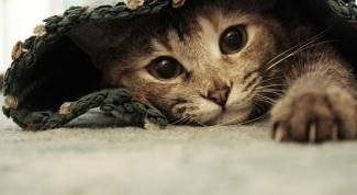 Почему у кошек лезет шерсть