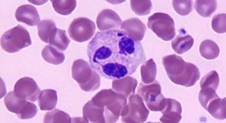 Как снизить количество лейкоцитов