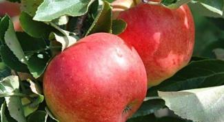 Почему азотные удобрения вносят весной