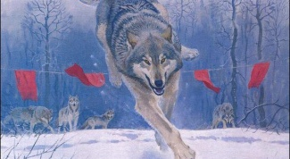 Why wolves are scared of flags