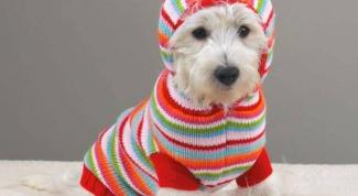 Как вязать вещи для собак