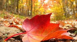 Почему листья скручиваются