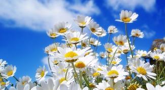 Зачем нужны цветы