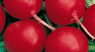 Как посадить редиску