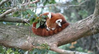 Почему животные спят клубком