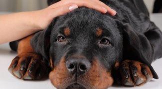 Как промыть желудок собаке