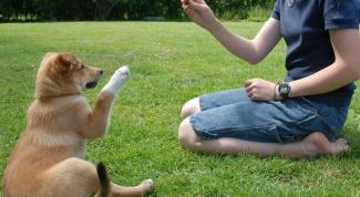 Как тренировать собаку