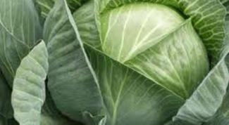 Как готовить блюда из капусты в духовке