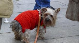 Как связать жилет для собаки