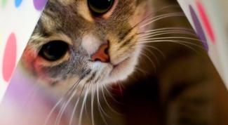 Как вывести клещей у кошки