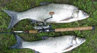 Как ловить рыбу спиннингом в 2017 году