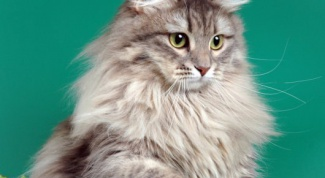 Как выбрать кличку кошке