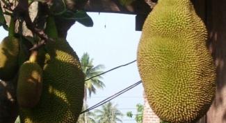 Как привезти фрукты из Таиланда