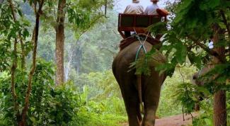 Как нарисовать джунгли