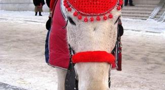 Как связать ушки на лошадь