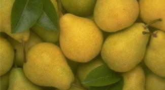 Как пересадить грушу
