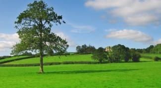 Как купить муниципальную землю
