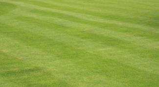 Как засеять газон