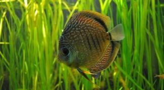 Как избавиться от зелени в аквариуме