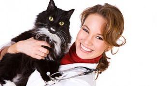 Как вылечить уши у кошки