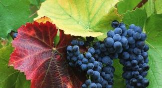 Как использовать масло виноградных косточек