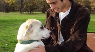 Как приручить взрослую собаку