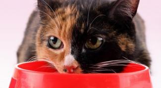 Как лечить печень у кота