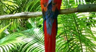 Как научиться рисовать попугая