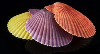 Как использовать морские ракушки в интерьере