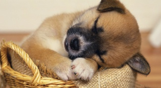 What to do if the puppy has diarrhea