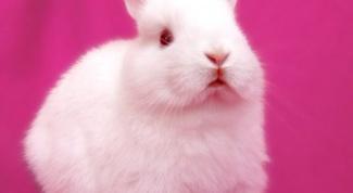 Как приучить к поилке кролика