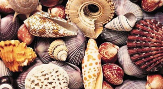 делать поделки из морских ракушек