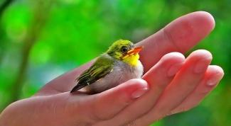 Почему человек не может жить без природы