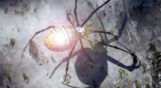 Как сделать паука из фольги