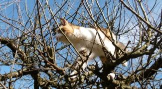 Как найти домашнее животное