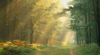 Как найти дорогу из леса в 2018 году