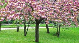 Как обрабатывать садовые деревья