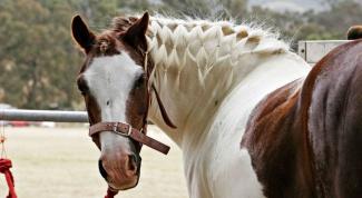Как заплести гриву у коня