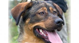 Как найти потерянную собаку