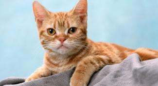 Как выбрать кошачий сухой корм