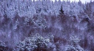 Как выжить в тайге зимой