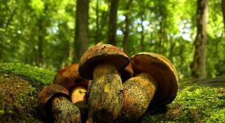 Как засушить грибы