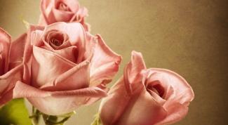 Как сделать, чтобы розы дольше стояли