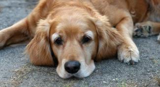 Как сделать собаке будку