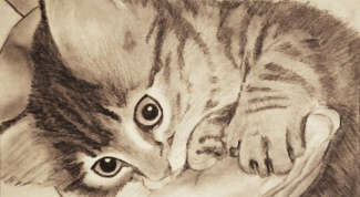 Как рисовать кошек карандашом