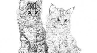 Как нарисовать кошку карандашом