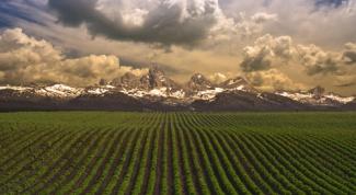 Как защищать почву на полях